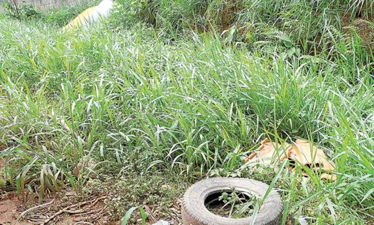 Prefeitura realiza limpeza em terrenos privados para evitar a proliferação da dengue
