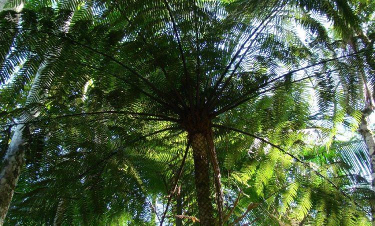 Saiba mais sobre a importância e as diretrizes da arborização urbana no município