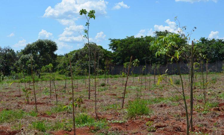 Jardim Progresso recebe novas mudas de árvores em área verde