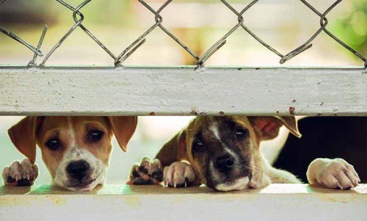 Prefeitura abre inscrições para castração de animais