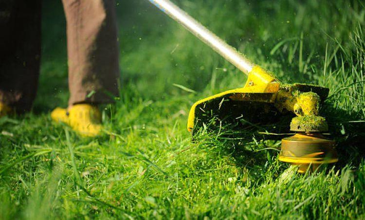 Prefeitura alerta para a importância de manter terrenos e quintais limpos